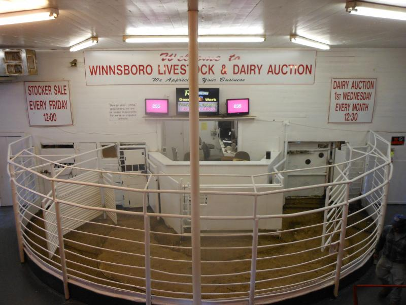 WINNSBORO LIVESTOCK & DAIRY AUCTION - Welcome STOCKER SALE